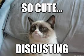 grumpy cat - so cute disgusting
