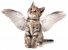 kittens with angel wings