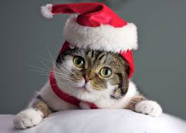 cat holiday
